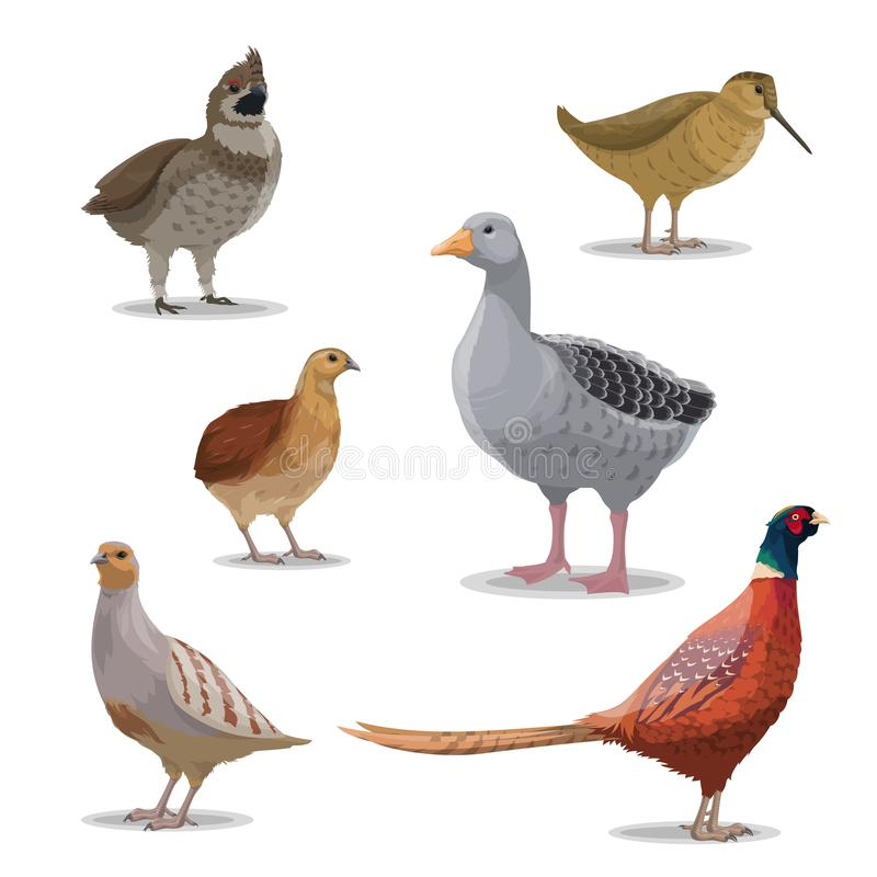 Free Isolated Hunting Birds, Vector Wildfowl Royalty Free Stock Image - 139194756