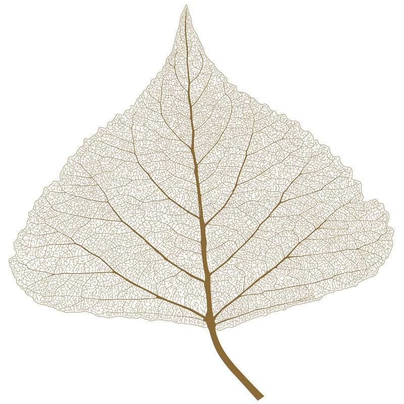 Isolated leaf with ribs stock image