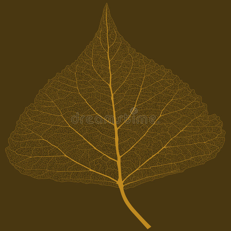 Isolated leaf with ribs stock images