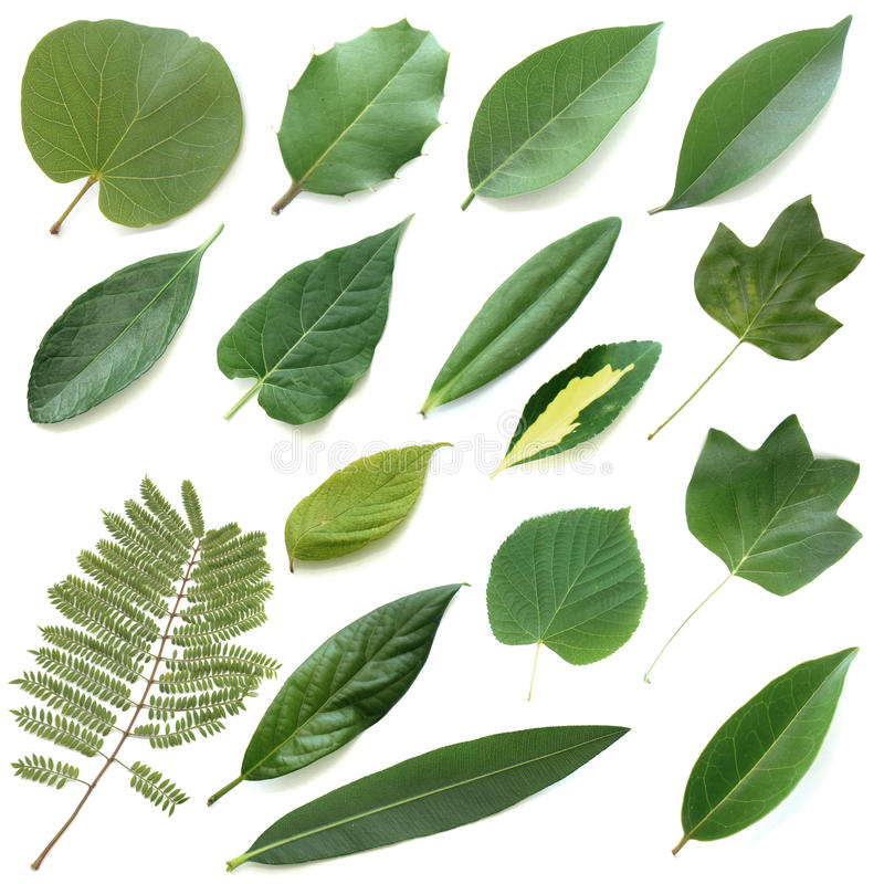 Isolated Leaves Set Royalty Free Stock Photo