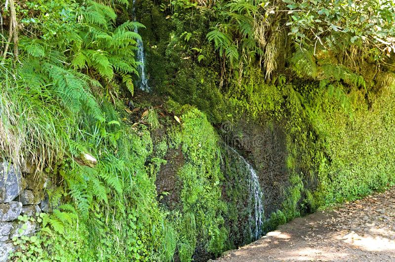 Isolated little cascade in a `levada`. `Levadas` are typical handmade drainage channel in Madeira Portugal,Europe royalty free stock image