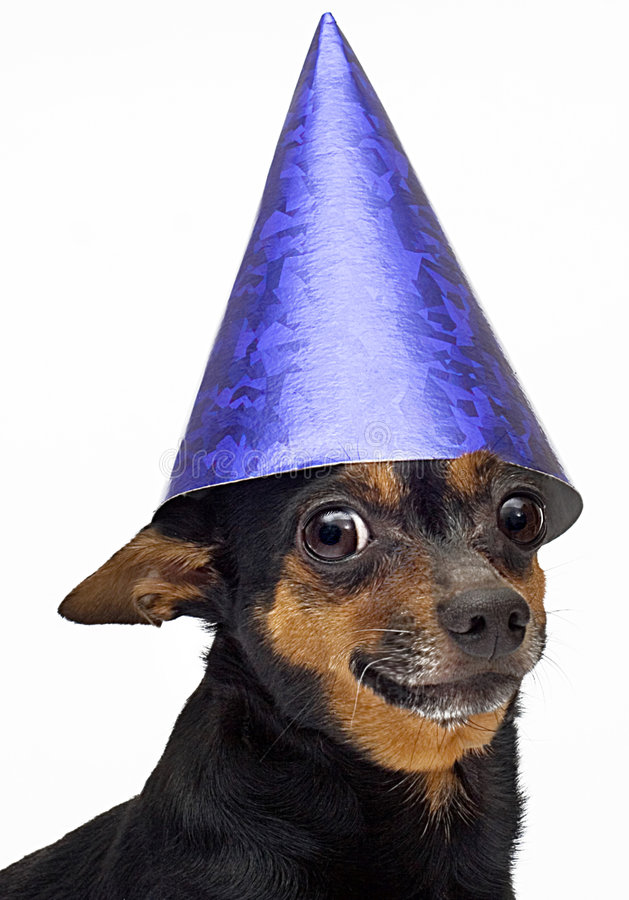 Isolated little dog royalty free stock photography