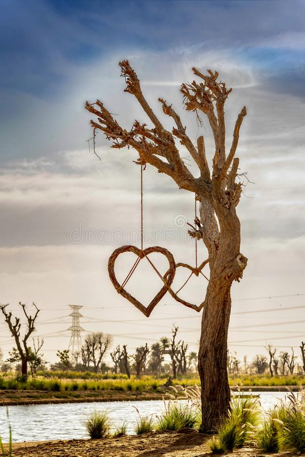 Isolated Love Tree at Dubai Love Lake. stock images