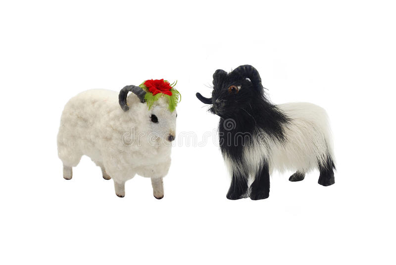 Isolated male and female sheep toys photo. Isolated male and female sheep toys photo angle view royalty free stock photography