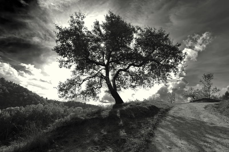Mountain Landscape. Isolated monochrome tree and the sun in background, at sunset stock images