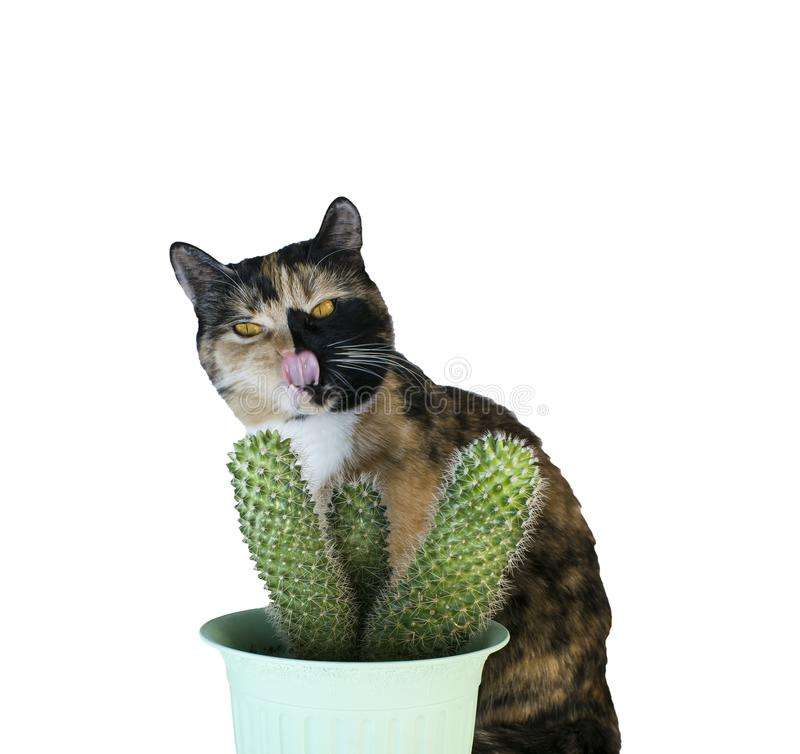 Isolated multi-colored cat with cactus on white background.  royalty free stock photo