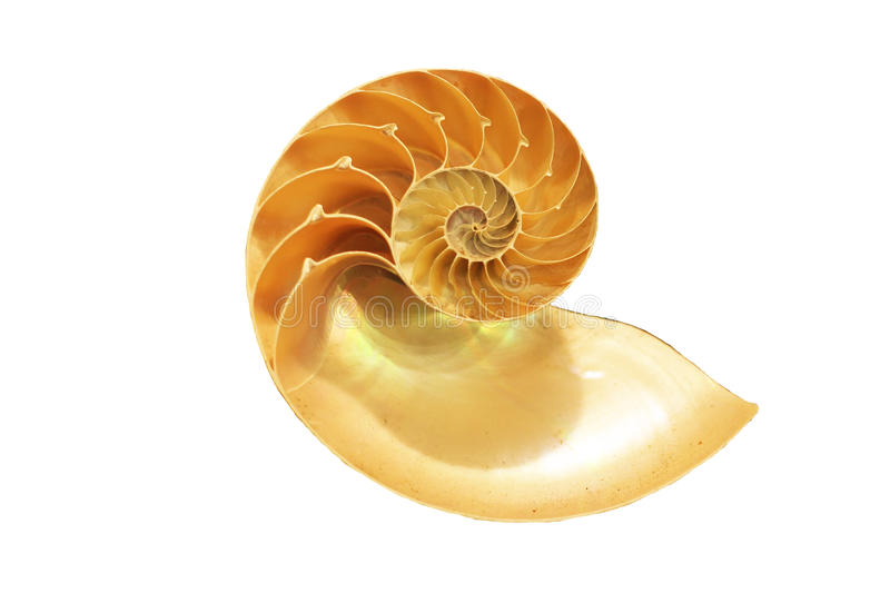 Isolated nautilus shell royalty free stock photos