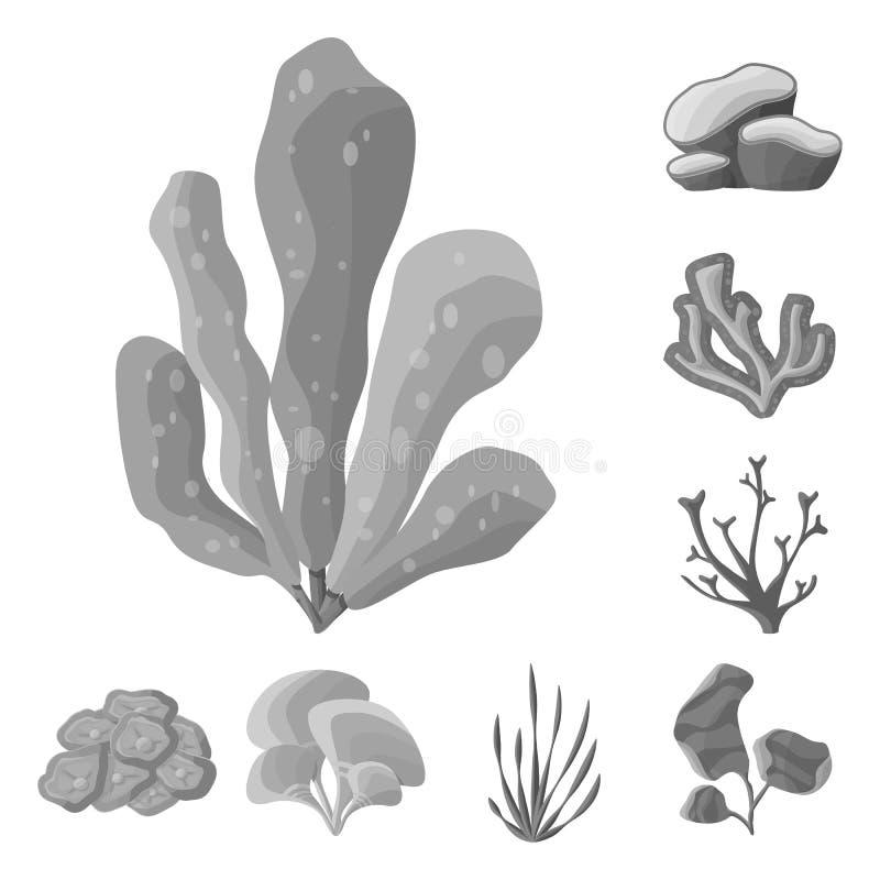 Vector illustration of botanical and flora logo. Collection of botanical and nature stock symbol for web. Isolated object of botanical and flora icon. Set of royalty free illustration