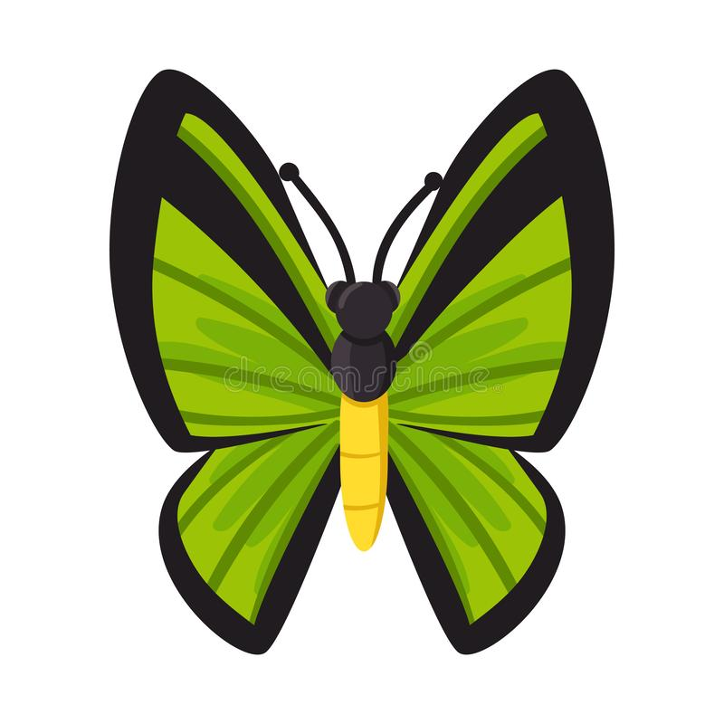 Isolated object of butterfly and beautiful logo. Collection of butterfly and multicolor stock symbol for web. vector illustration