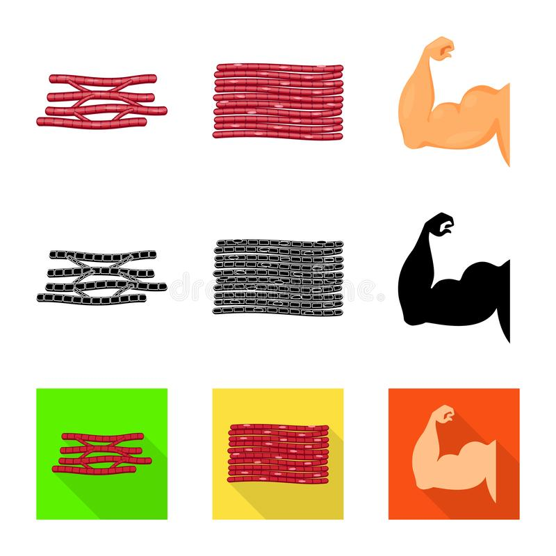 Vector illustration of fiber and muscular logo. Set of fiber and body  vector icon for stock. Isolated object of fiber and muscular icon. Collection of fiber stock illustration