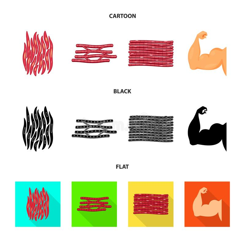 Isolated object of fiber and muscular icon. Collection of fiber and body stock vector illustration. Vector design of fiber and muscular symbol. Set of fiber and royalty free illustration
