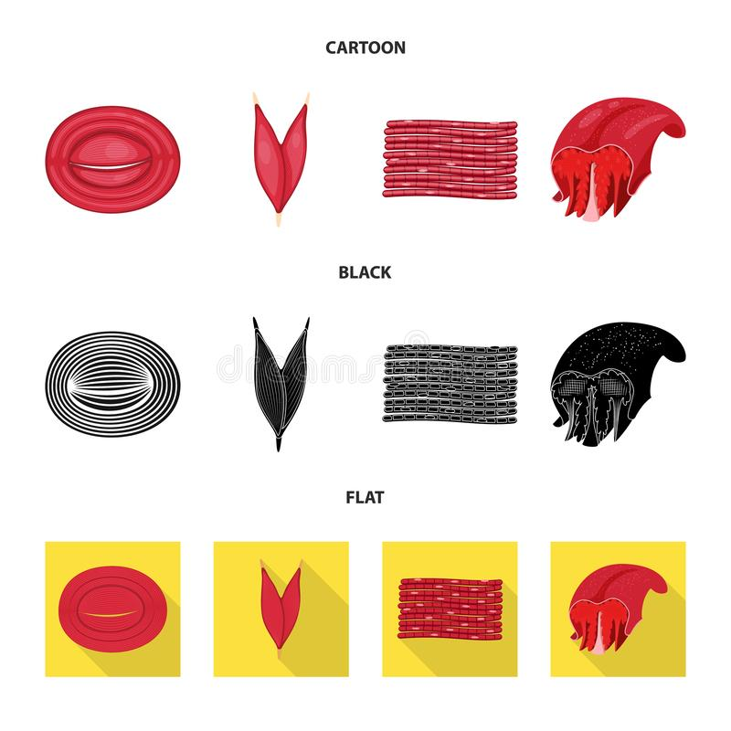 Isolated object of fiber and muscular icon. Collection of fiber and body vector icon for stock. Vector design of fiber and muscular symbol. Set of fiber and royalty free illustration