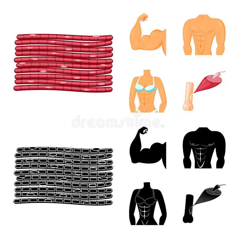 Vector illustration of fiber and muscular logo. Collection of fiber and body stock symbol for web. Isolated object of fiber and muscular icon. Set of fiber and royalty free illustration