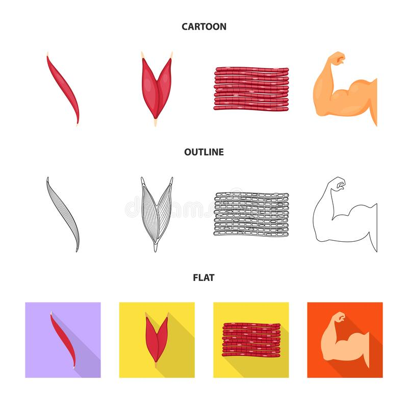 Vector illustration of fiber and muscular sign. Set of fiber and body  vector icon for stock. Isolated object of fiber and muscular logo. Collection of fiber royalty free illustration