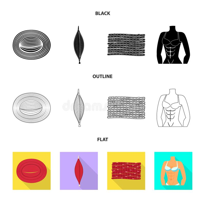 Isolated object of fiber and muscular logo. Collection of fiber and body  stock vector illustration. Vector design of fiber and muscular icon. Set of fiber and vector illustration