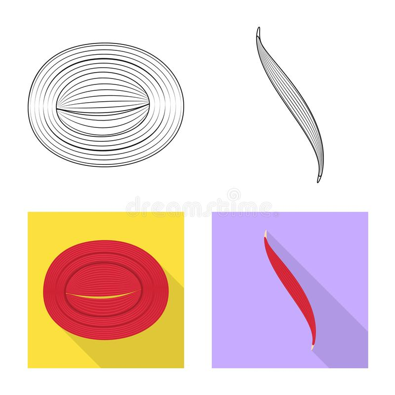 Vector illustration of fiber and muscular sign. Set of fiber and body stock vector illustration. Isolated object of fiber and muscular logo. Collection of fiber stock illustration