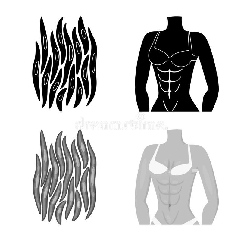 Isolated object of fiber and muscular logo. Set of fiber and body  stock symbol for web. Vector design of fiber and muscular icon. Collection of fiber and body royalty free illustration