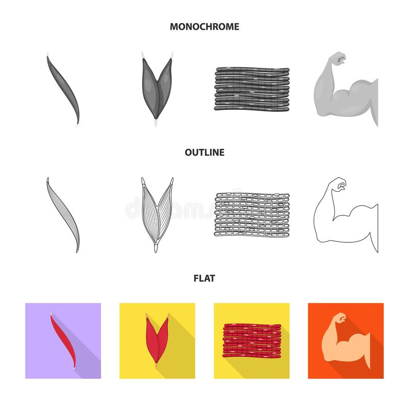Isolated object of fiber and muscular logo. Set of fiber and body  stock vector illustration. Vector design of fiber and muscular icon. Collection of fiber and stock illustration