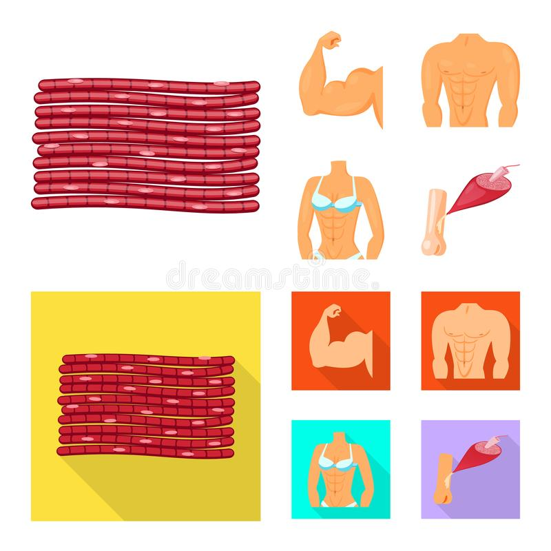 Vector illustration of fiber and muscular sign. Collection of fiber and body stock symbol for web. Isolated object of fiber and muscular logo. Set of fiber and vector illustration