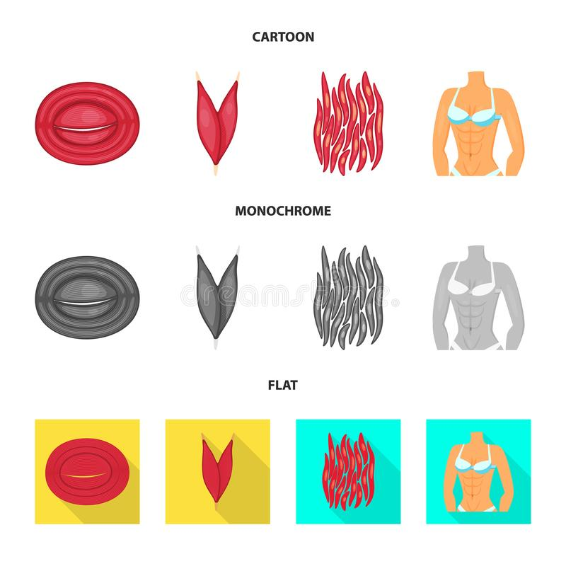 Isolated object of fiber and muscular logo. Set of fiber and body vector icon for stock. Vector design of fiber and muscular icon. Collection of fiber and body stock illustration