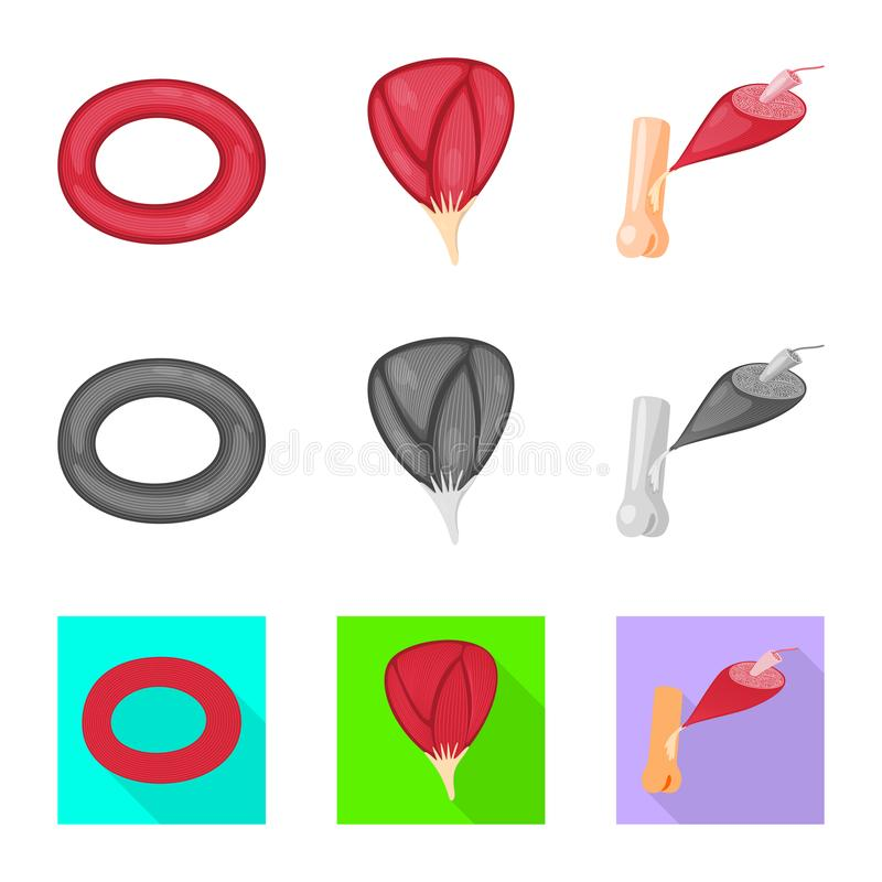 Isolated object of fiber and muscular sign. Collection of fiber and body vector icon for stock. Vector design of fiber and muscular logo. Set of fiber and body royalty free illustration
