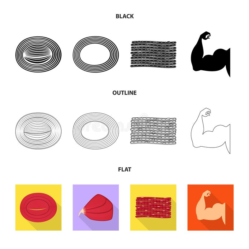 Isolated object of fiber and muscular sign. Collection of fiber and body stock symbol for web. Vector design of fiber and muscular logo. Set of fiber and body royalty free illustration