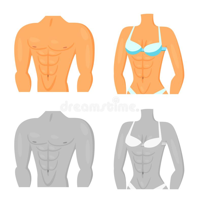 Isolated object of fiber and muscular sign. Collection of fiber and body stock vector illustration. Vector design of fiber and muscular logo. Set of fiber and royalty free illustration