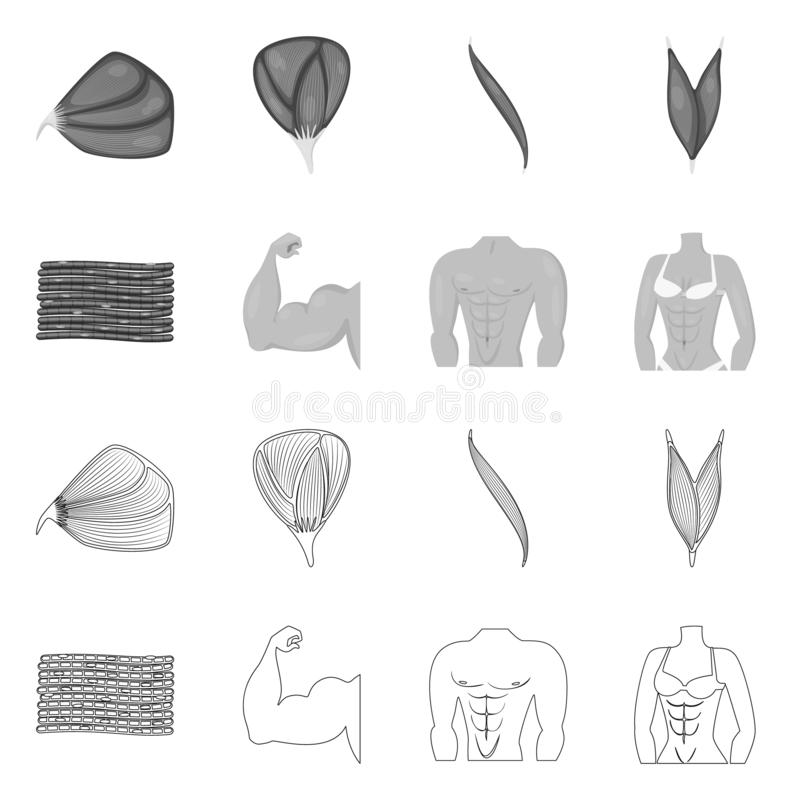 Isolated object of fiber and muscular sign. Set of fiber and body stock symbol for web. Vector design of fiber and muscular logo. Collection of fiber and body royalty free illustration