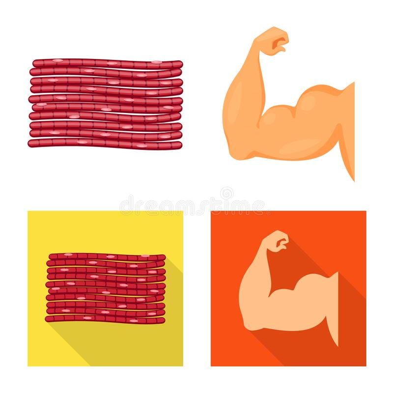 Isolated object of fiber and muscular sign. Set of fiber and body vector icon for stock. Vector design of fiber and muscular logo. Collection of fiber and body stock illustration