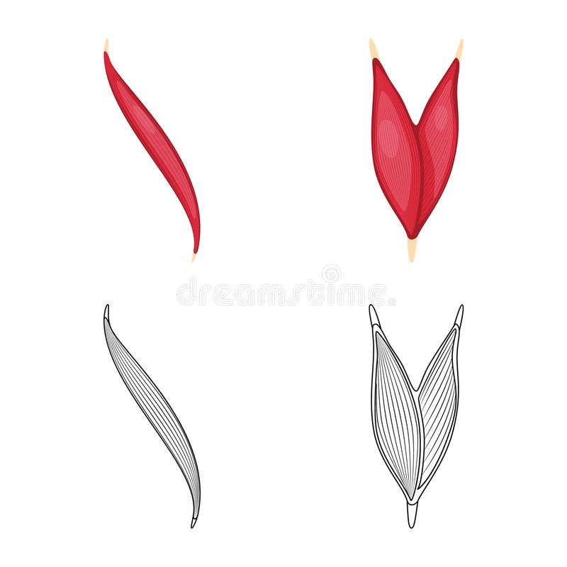 Vector illustration of fiber and muscular icon. Collection of fiber and body stock symbol for web. Isolated object of fiber and muscular symbol. Set of fiber vector illustration