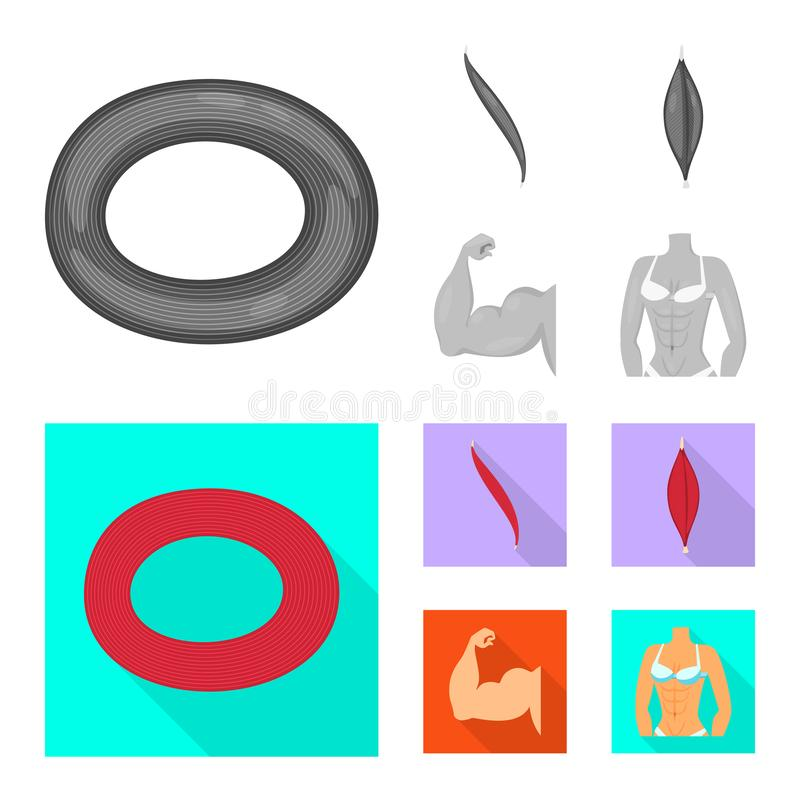 Isolated object of fiber and muscular symbol. Set of fiber and body vector icon for stock. Vector design of fiber and muscular sign. Collection of fiber and stock illustration