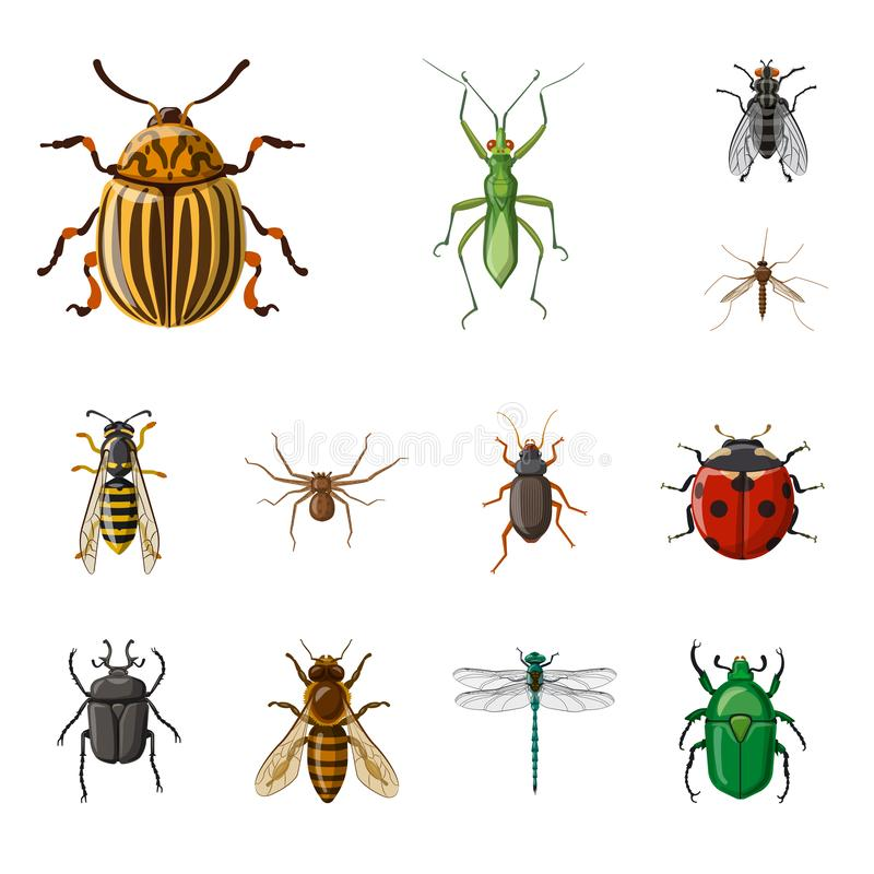 Vector illustration of insect and fly symbol. Collection of insect and element stock vector illustration. royalty free illustration
