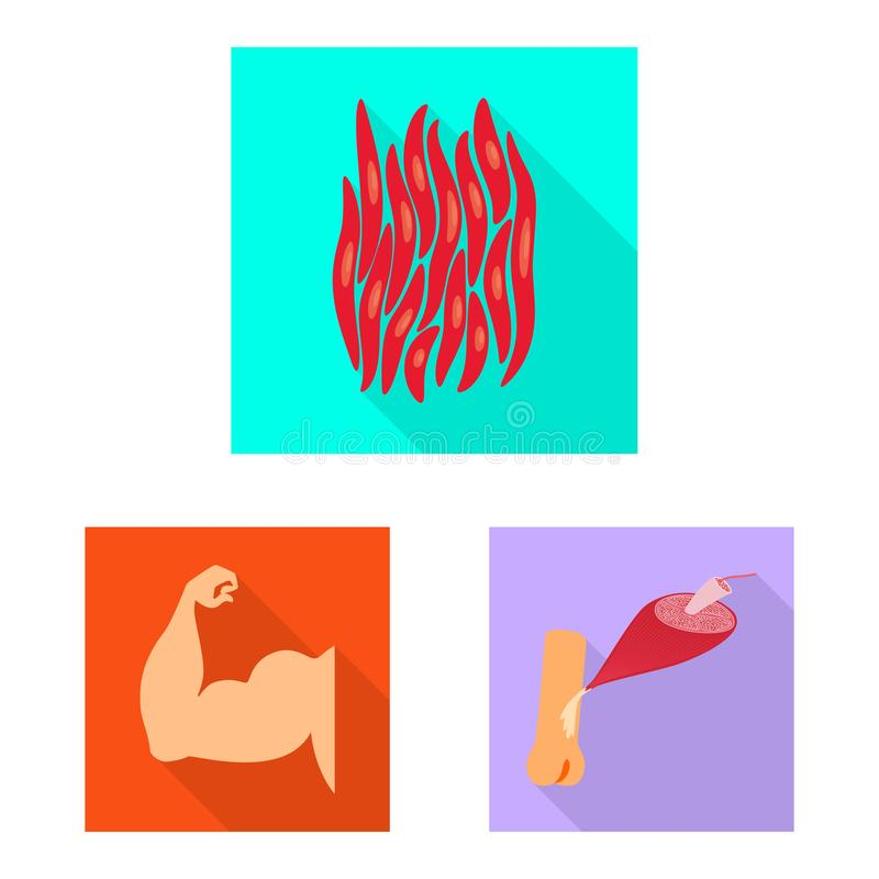 Vector illustration of muscle and cells logo. Collection of muscle and anatomy stock symbol for web. Isolated object of muscle and cells icon. Set of muscle and vector illustration