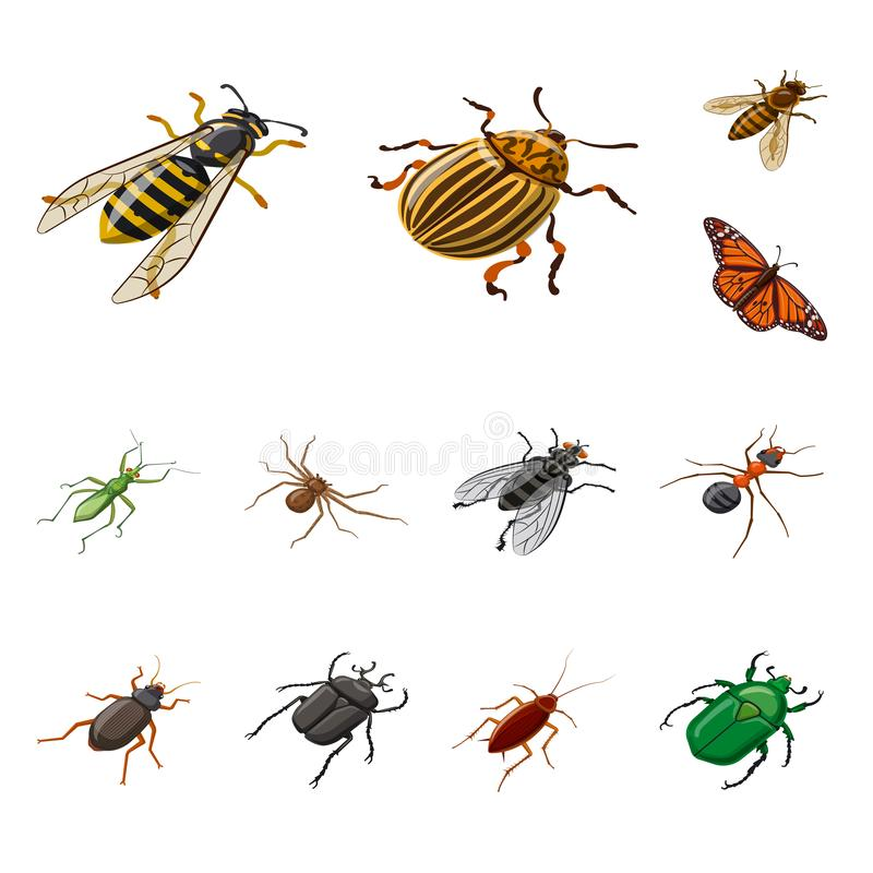 Free Isolated Object Of Insect And Fly Sign. Set Of Insect And Entomology Vector Icon For Stock. Stock Photo - 154152270