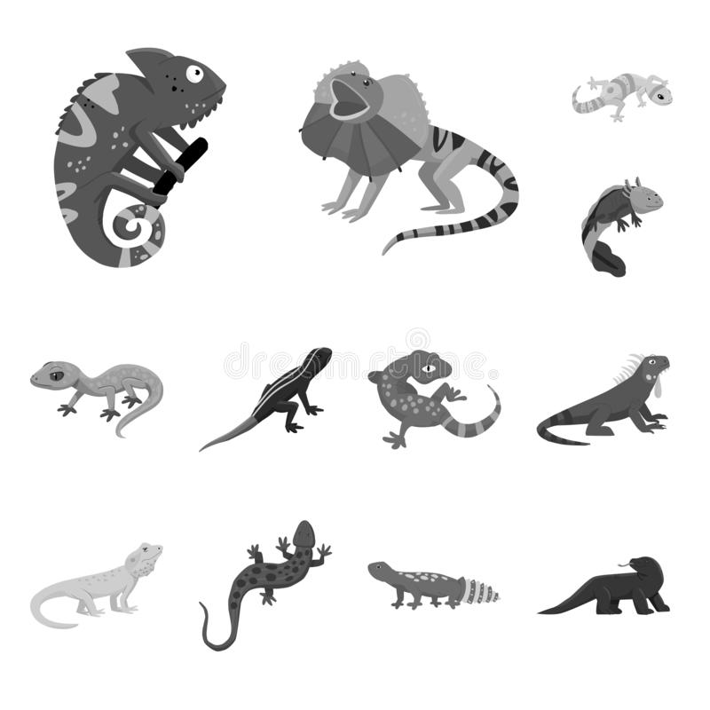 Vector illustration of wild and exotic icon. Set of wild and fauna stock symbol for web. Isolated object of wild and exotic symbol. Collection of wild and fauna vector illustration
