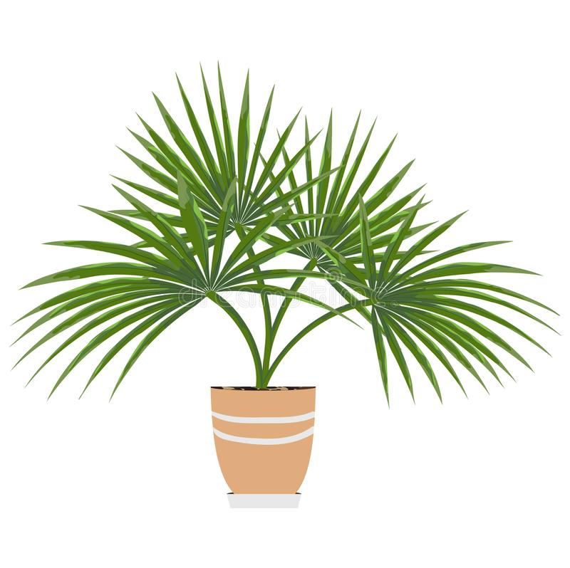 Isolated objects of indoor plants in watercolor style. Palm stock illustration