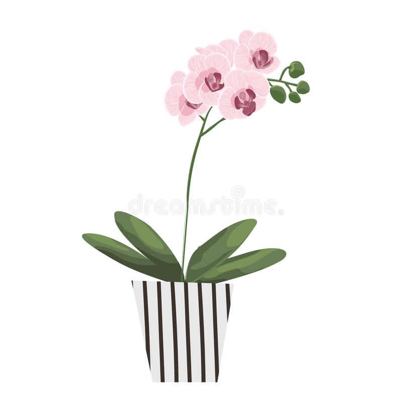 Isolated objects of indoor plants in watercolor style. orchid. Vector royalty free illustration