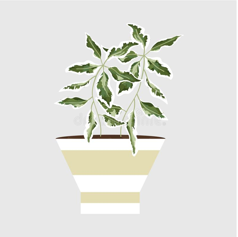 Isolated objects of indoor plants in watercolor style. Vector vector illustration