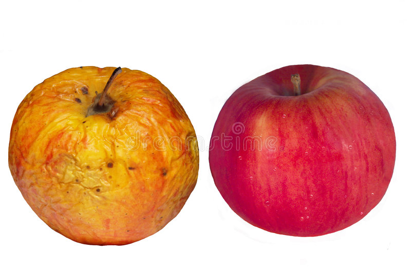 Isolated old & young apples. Concept. Picture of the isolated old & young apples. The good and bad skin, spots and wrinkles on the white background royalty free stock photography