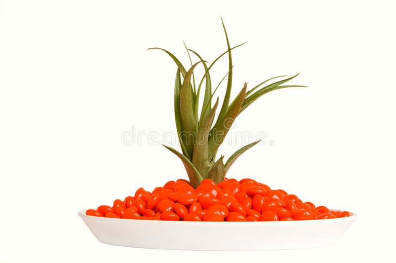 Isolated orange pills and green plant royalty free stock photo
