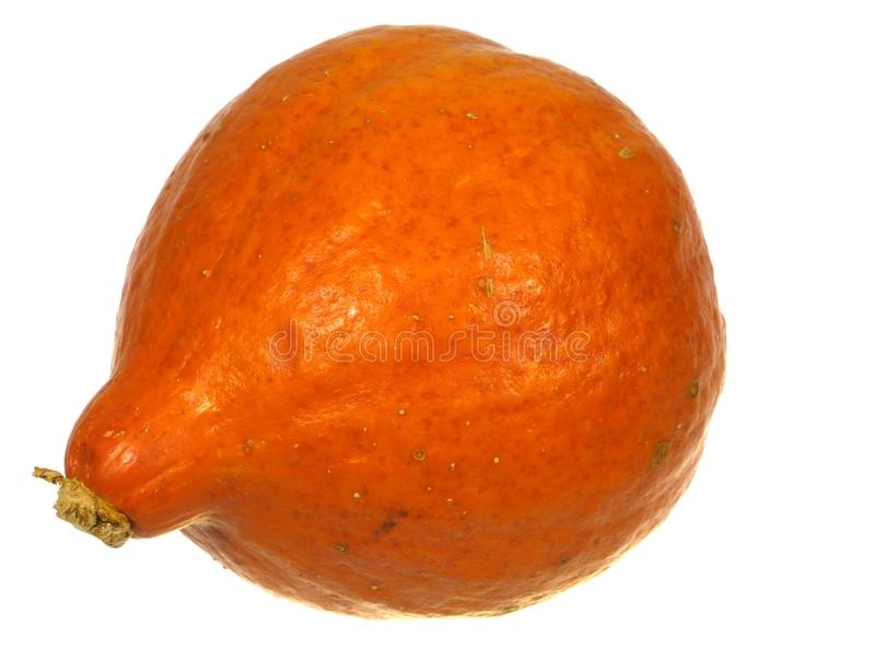 An isolated orange pumpkin. A pumpkin is a cultivar of the squash plant over white stock photos