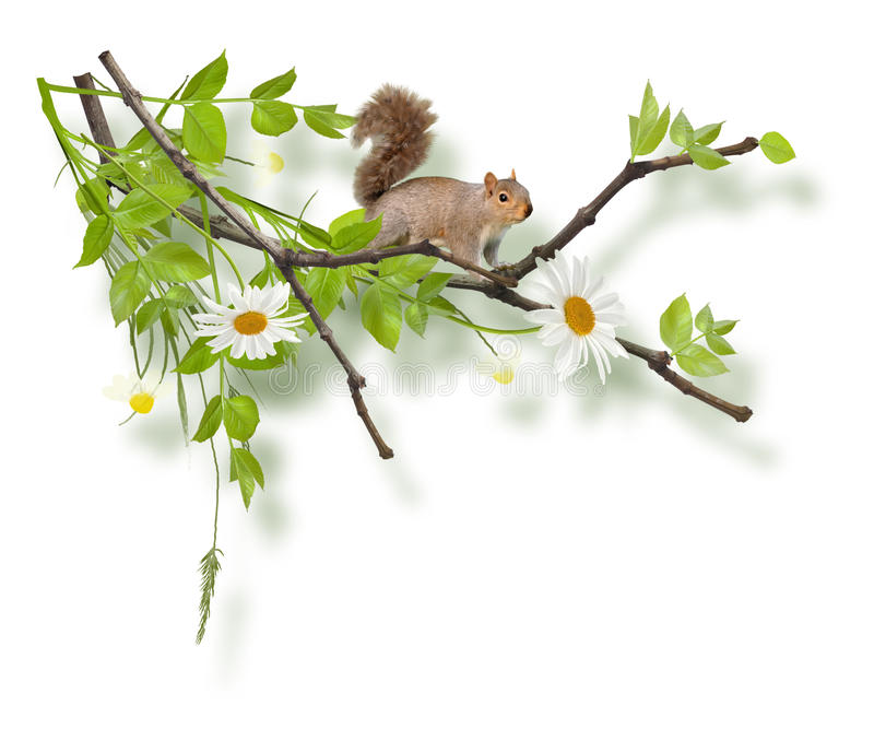 Isolated painted composition with squirrel on tree. Isolated on white stock photo