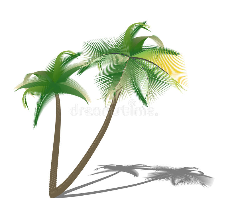 Isolated palm trees with shade. Illustration stock illustration