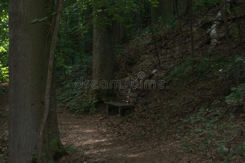 Isolated park bench in the middle of a forest and surrounded by large trees royalty free stock photography