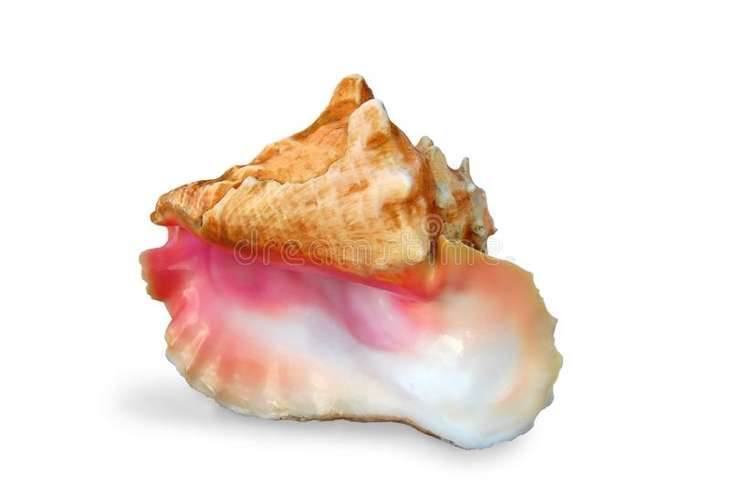 Download Isolated Pearly Pink Conch Shell Stock Photo - Image of nobody, pearly: 17273292