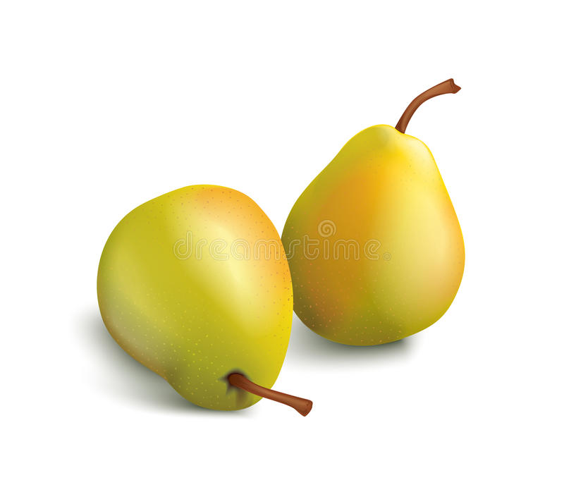Download Isolated pears stock vector. Image of pears, background - 13133889