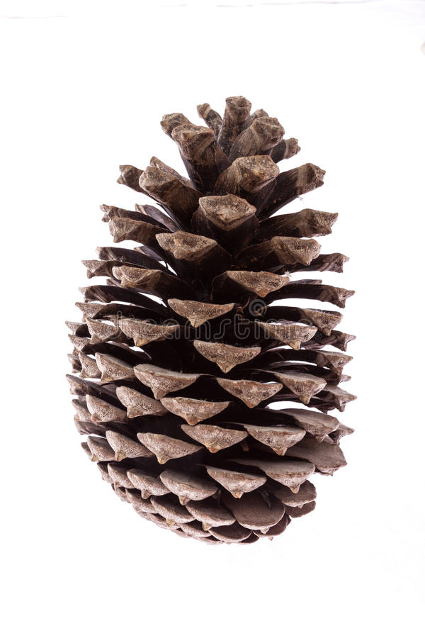 Download Isolated pine cone stock image. Image of decoration, background - 24112427