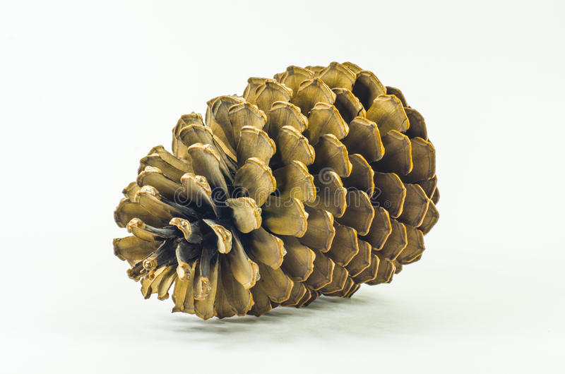 Isolated pinecone. One big isolated pinecone on white background. Closeup photo royalty free stock photo