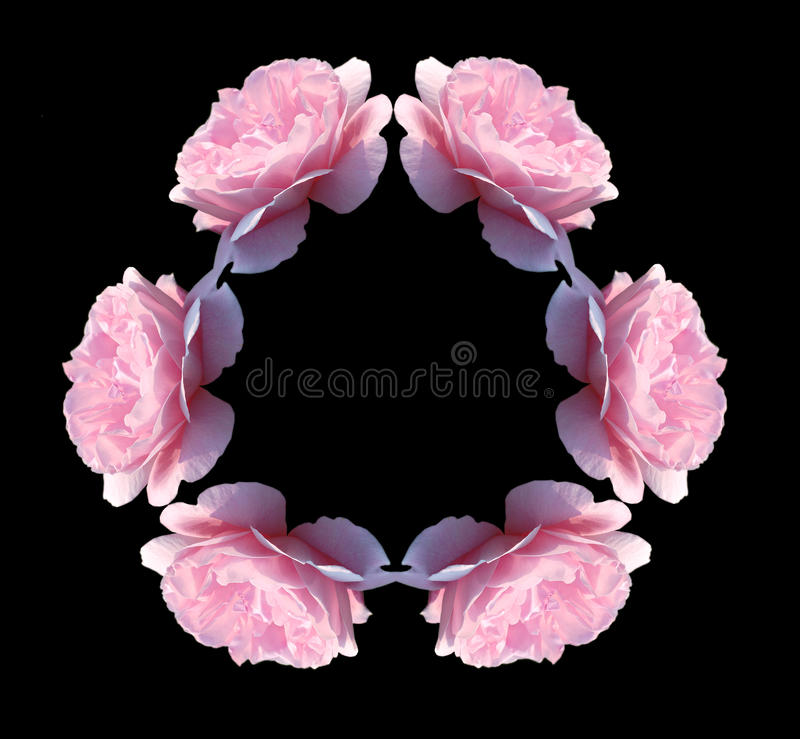 Free Isolated Pink Rose Flowers Kaleidoscope Royalty Free Stock Image - 12601976