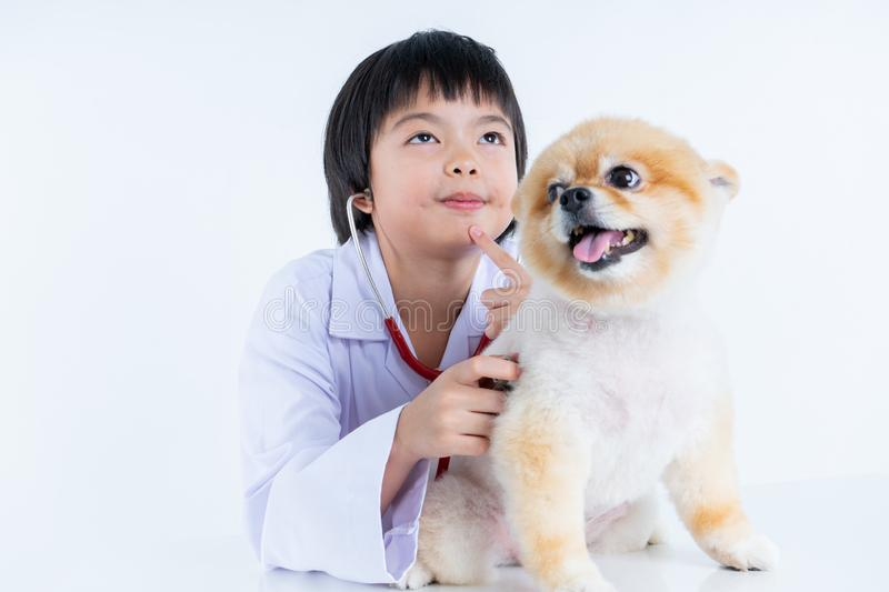 Isolated portrait of young female veterinarian checking up Pomeranian dog in veterinary clinic. Studio shot of girl and puppy on. Isolated portrait of young stock photo